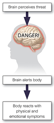 Outline of head with brain inside. Danger written across brain. Arrows show steps of anxiety response: brain perceives threat, brain alerts body, body reacts with physical and emotional symptoms.